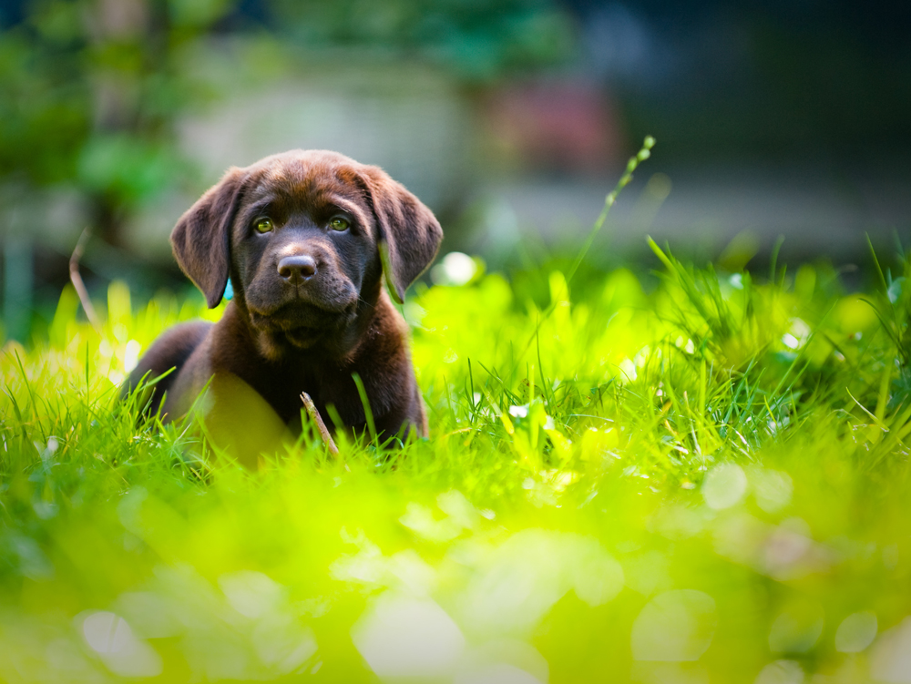 For the Dogs: Landscaping Tips for a Beautiful, Fido-Friendly Outdoor Space