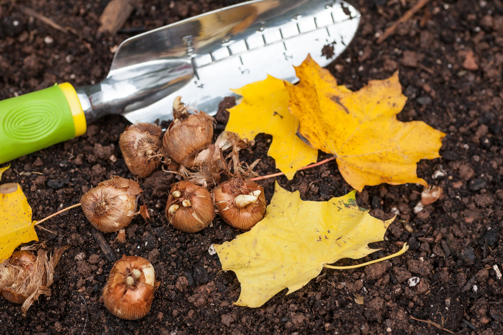 The Autumn Garden – Fall-Flowering Plants