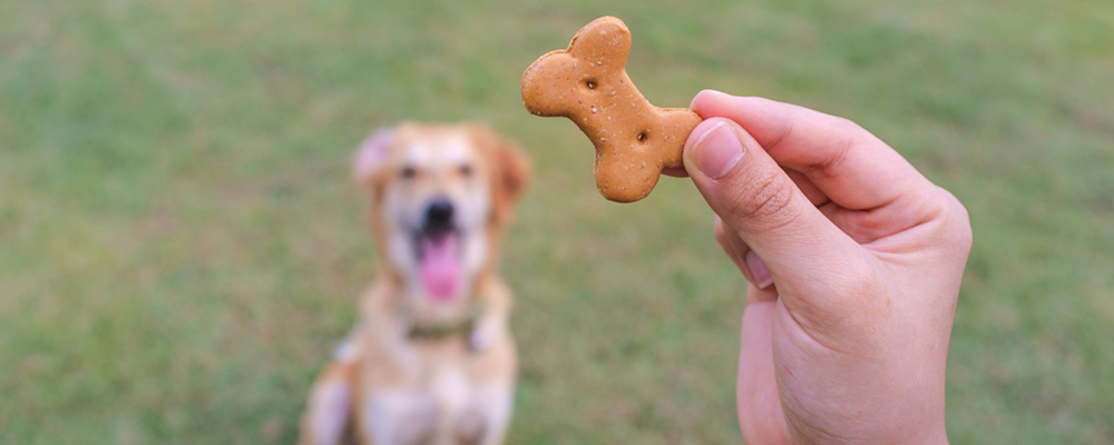dog-treat