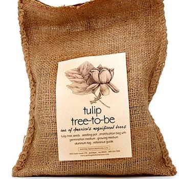 Tulip to be Tree