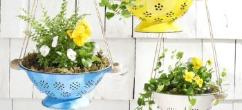 colander plants