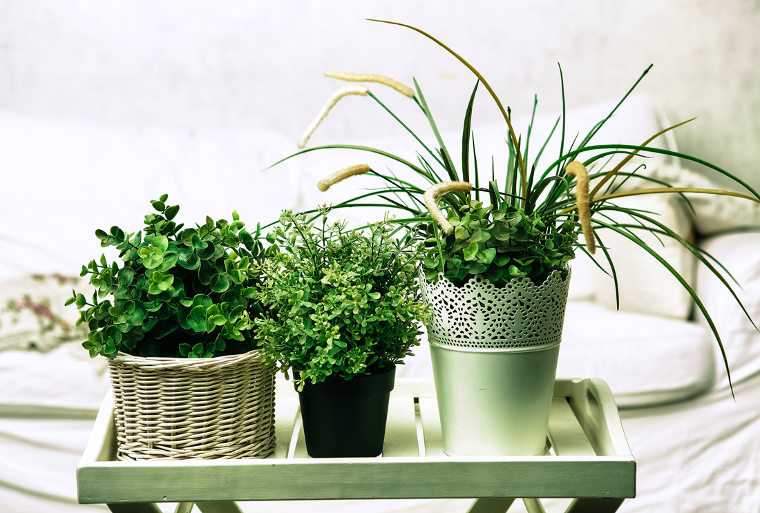 Plants that Purify Indoor Air