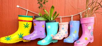 Rain Boot Plants