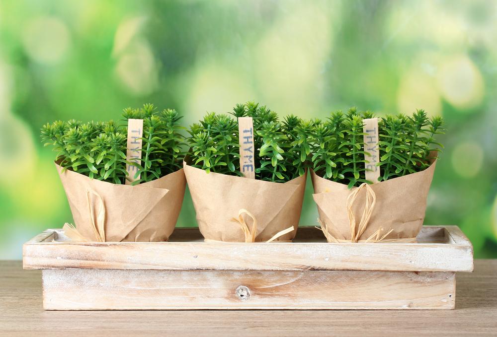 How To Plant An Indoor Herb Garden