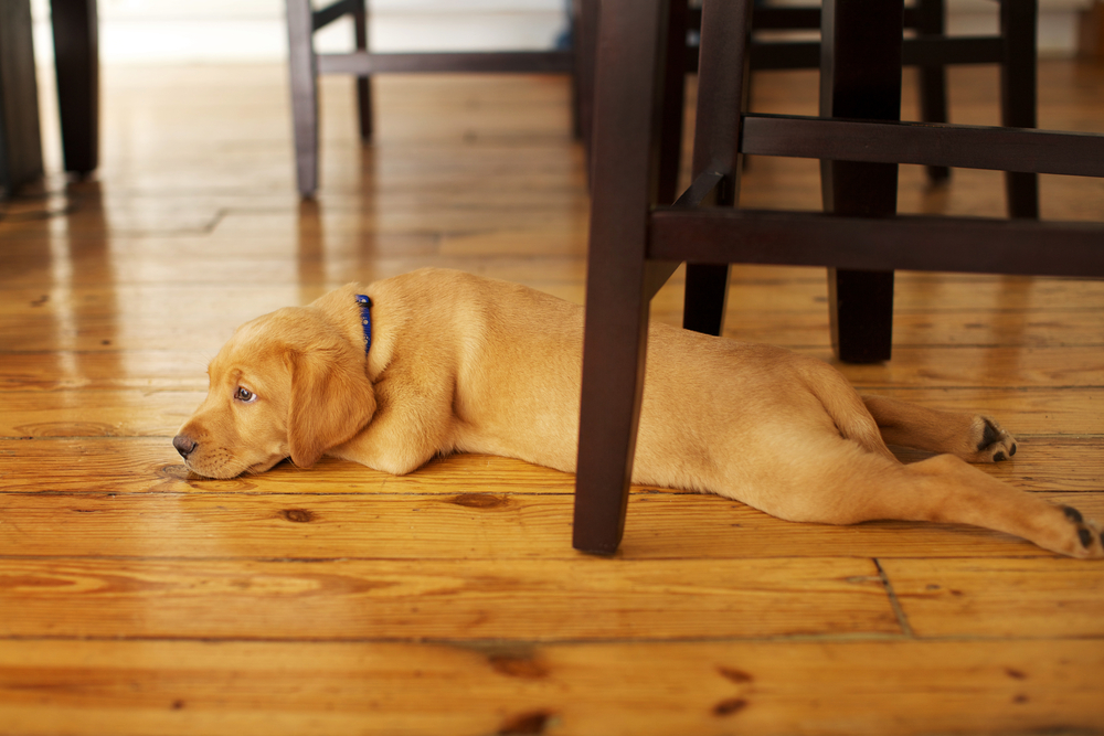 clean floors for dogs