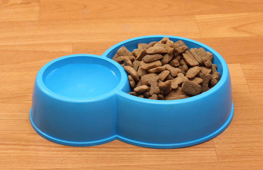 water and food dog bowl