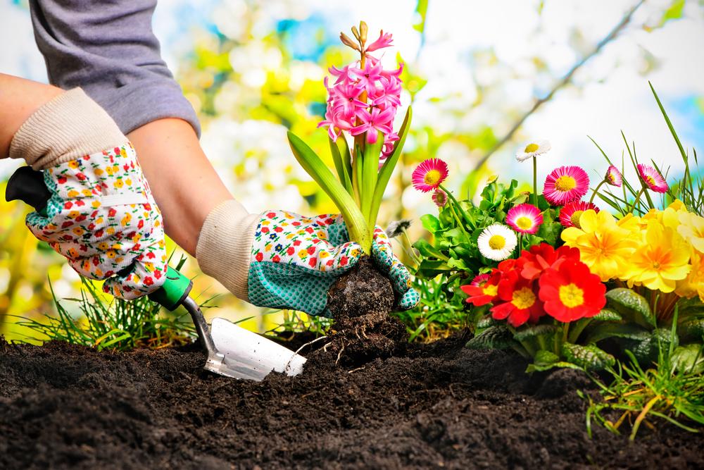How To Grow A Bountiful Summer Flower Garden