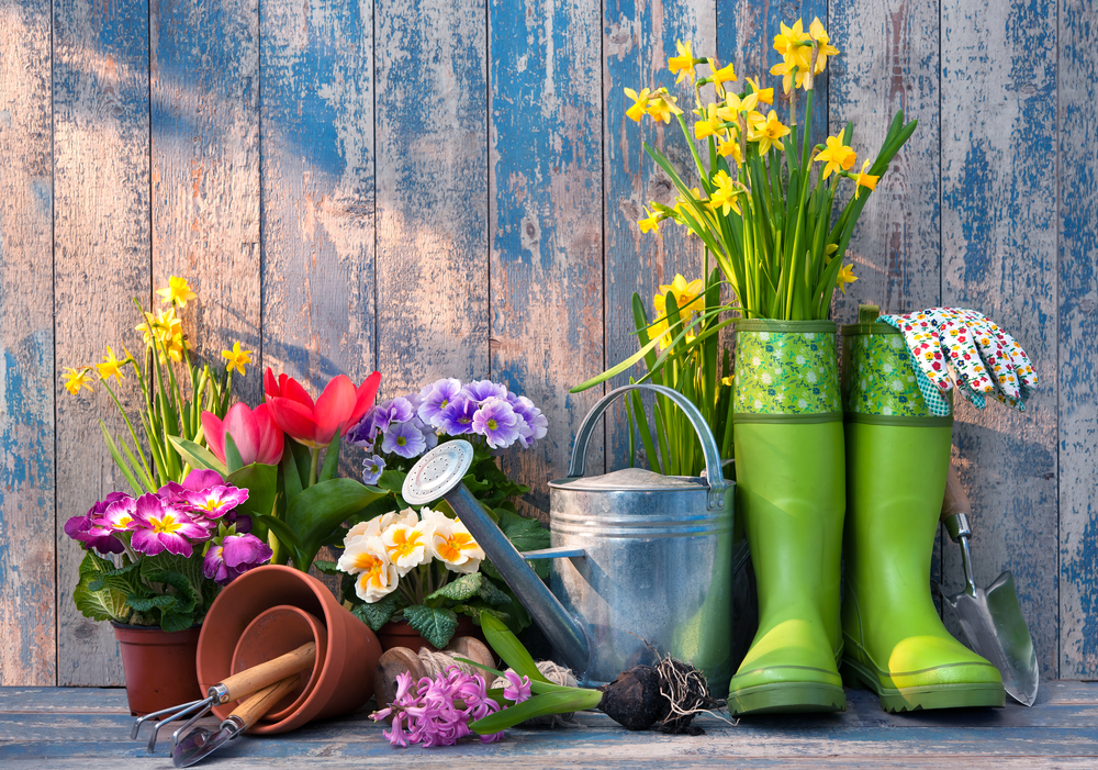 Plant, Flower And Herb Ideas To Dress Up A Small Outdoor Area