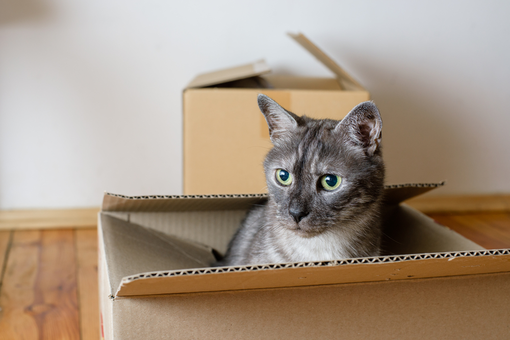 Helping Your Pet Adjust To A New Home