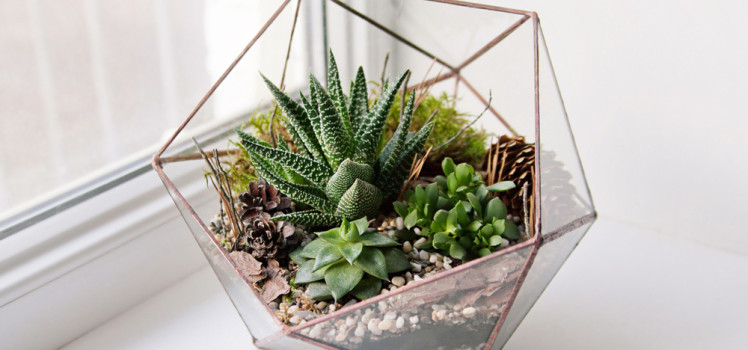 diy make your own green terrarium. Black Bedroom Furniture Sets. Home Design Ideas