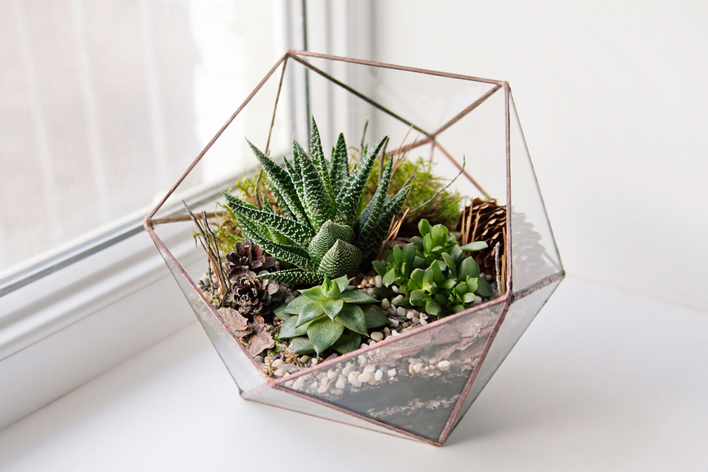 Diy Make Your Own Green Terrarium