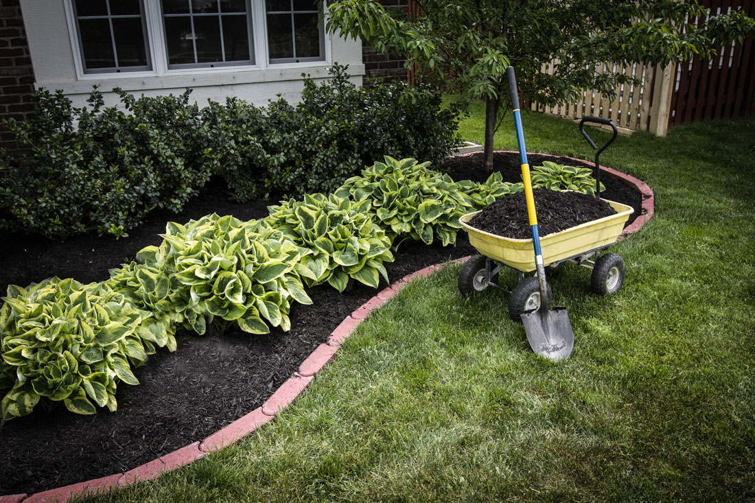 Revamp your home with lush landscaping for Choosing plants for landscaping