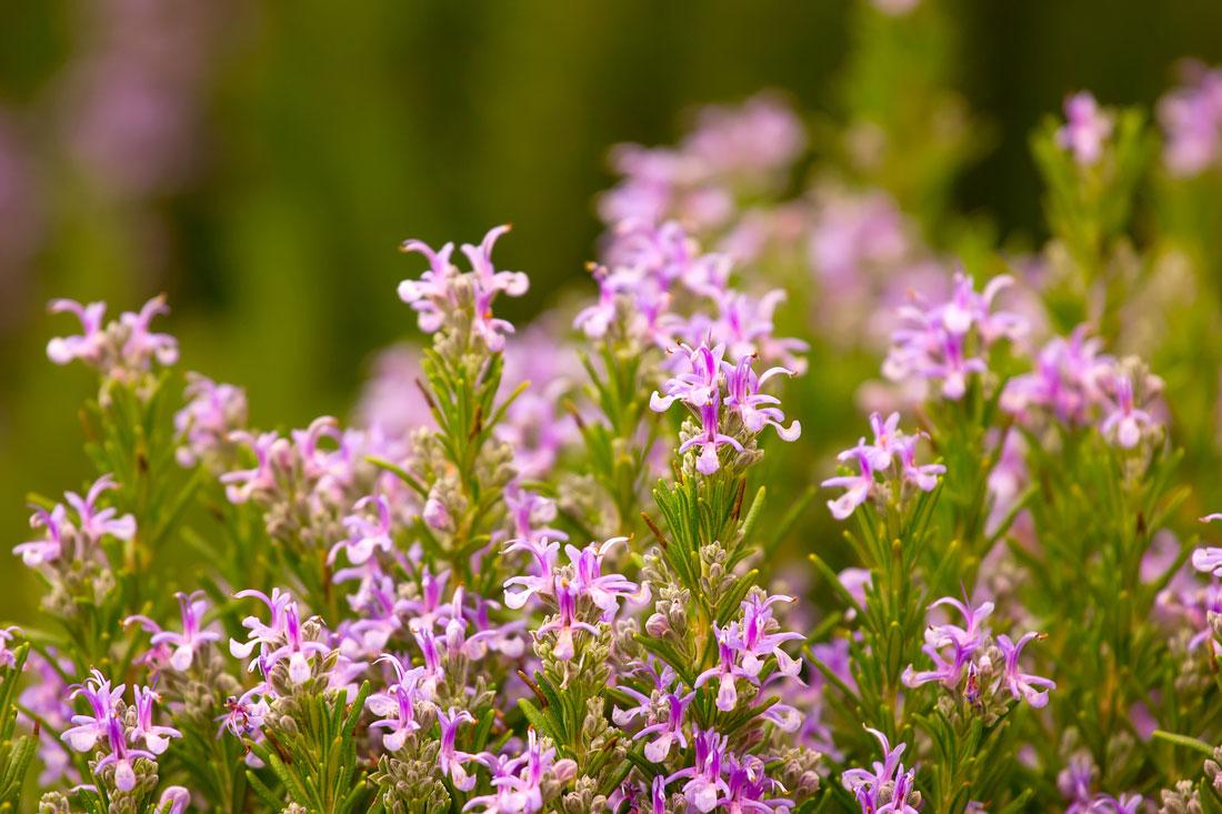 Garden To Table: Edible Perennials For Your Planters