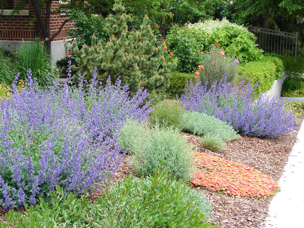 Xeriscaping is sustainable and beautiful.