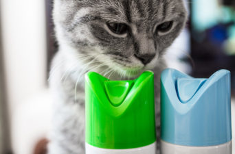 Learn how to prevent pet poisoning.
