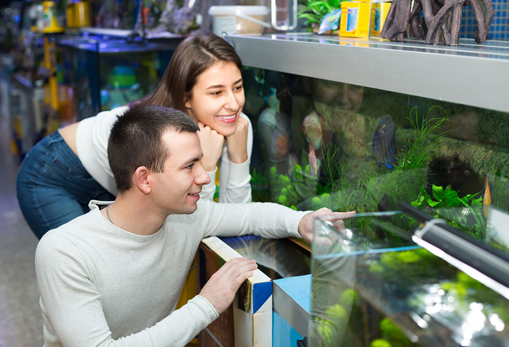 Smart aquarium apps and tools ease fish tank care