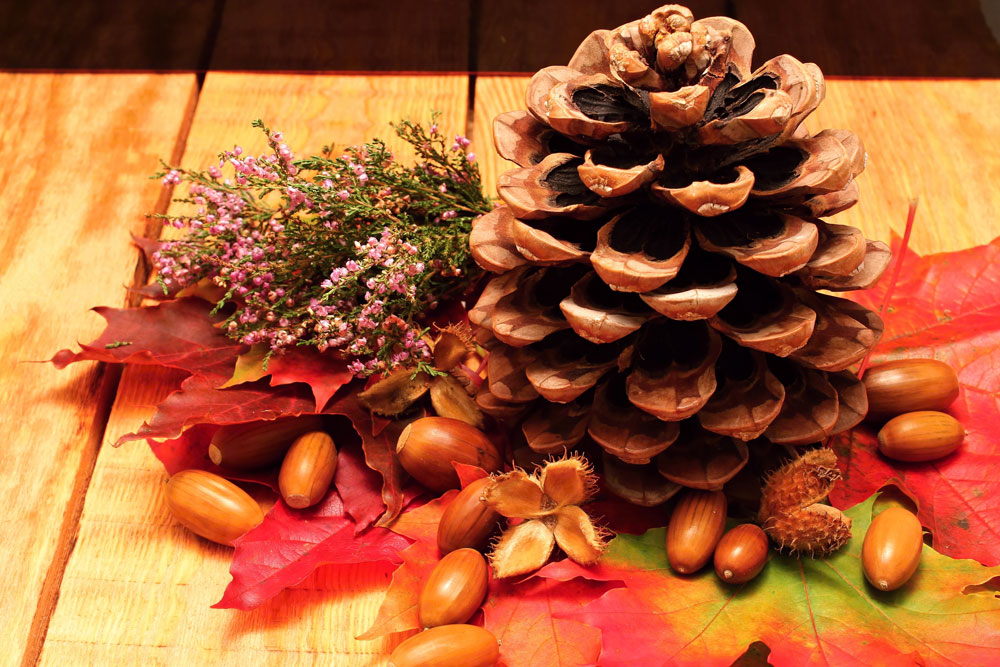 Pinecones make beautiful fall crafts