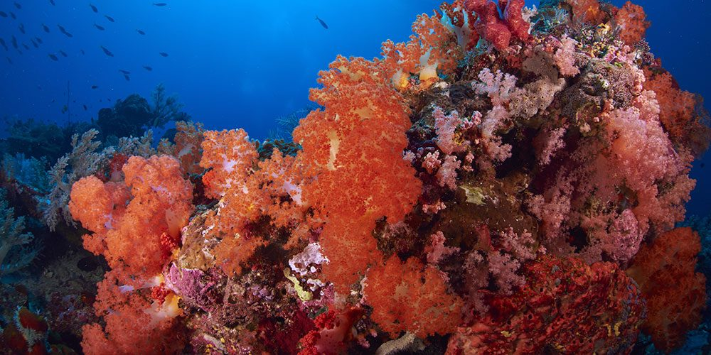 Coral reefs inspired the 2019 Pantone Color of the Year.